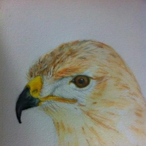 Buse variable dans aquarelle 75580_561258637225462_1497262504_n1-300x300